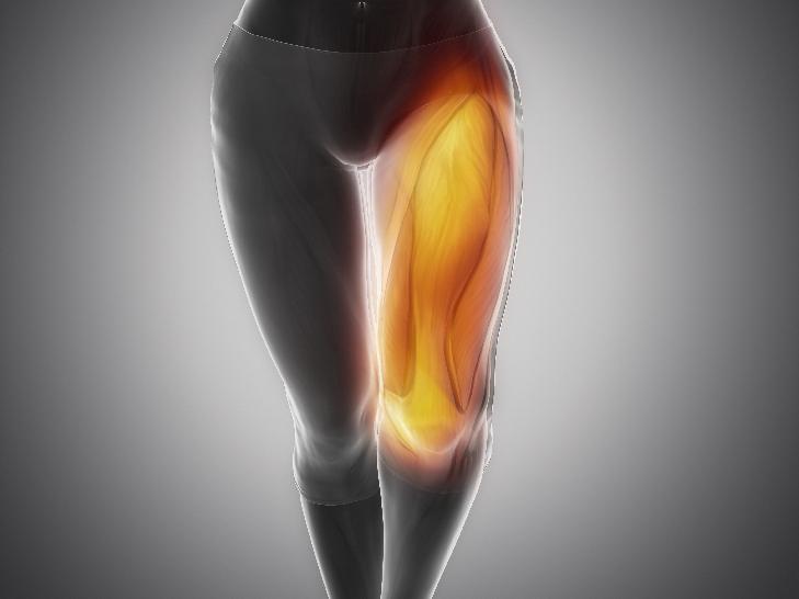 大腿四頭筋3D